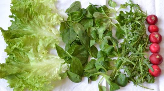 umyty salat.jpgzm