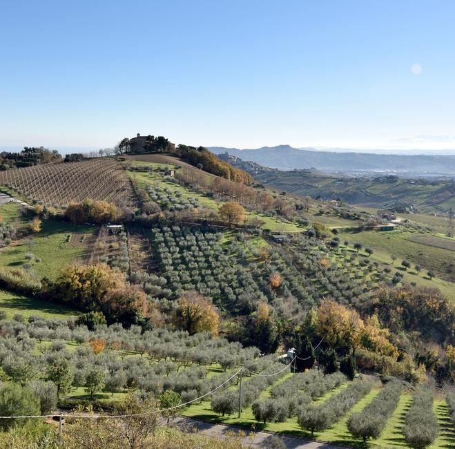 Čerstvý olivový olej priamo z talianskej farmy